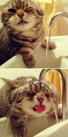 Cat under faucet CAT+FAUCET=ADORABLE