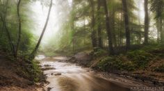 Misty Sommer magic - This shot is taken on a misty summer morning in Germany after several days of heavy rain. It is a panorama shot out of five single frames. The small river was filled up with water in a brown golden tone due to the sediment in the river after the strong rain falls. It was a great atmosphere this morning close to my hometown. The sun just started to breack through the high mist.