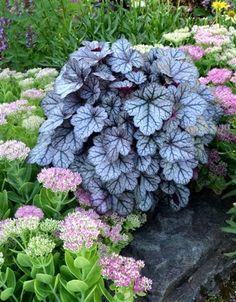Image result for landscaping plants nz