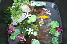 Miniature Koi Pond in Resin