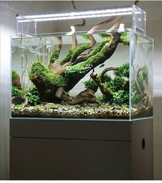 What do you think of this aquascape? We think it looks awesome! -----Photo from…