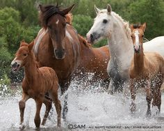 Wild Horses  The Horse symbol meanings of power are widespread through most cultures, and it is linked as an emblem of life-force. Many cultures assign the attributes of the four elements to the Horse: Earth, Fire, Air, and Water.