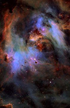 Globules in the Running Chicken Nebula Image Credit & Copyright: Fred Vanderhaven