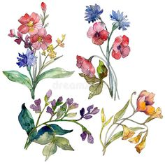 Wildflower bouquet floral botanical flowers. Watercolor background set. Isolated wildflowers illustration element.. Illustration about paint, cyanus, hand, flower, colorful - 141645165 Watercolor Flowers, Watercolor Background, Watercolor Painting, Watercolors, Xray Flower, Flower Bouquet Drawing, Wildflower Drawing, Botanical Flowers, Wild Flowers