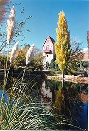 Mt Whitney Fish Hatchery; Independence, CA. Loved stopping here every summer as a kid on the way back from Bridgeport.