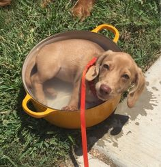 And this puppy who's just hangin' inside a pot of water.