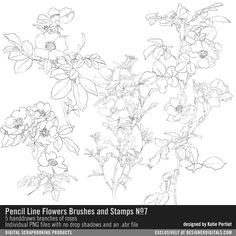 Pencil Line Flowers Brushes and Stamps No. 07 handdrawn roses in PNG and ABR files for cardmaking and digital scrapbooking #designerdigitals