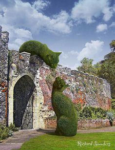 Topiary Cats ===> this is awesome but i gotta wonder if that's a small wall or giant cat plants.