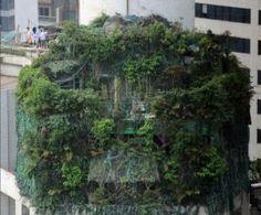 中國廣州最近有處頂樓違建頗受關注,樓高三層的違建外觀,幾乎被綠色植物覆蓋,被當地稱作樓頂的原始森林,讓人大開眼界。(圖擷取自新華網)