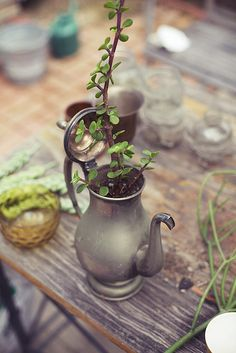 tea pot planter - my mother has a tea pot set just like this. She'd KILL me if I used it for this (but I really want to!).
