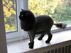 Kittens With Lion Haircuts