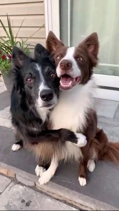 Cute Funny Dogs, Cute Funny Animals, Cute Dogs And Puppies, I Love Dogs, Doggies, Cute Animal Videos, Tier Fotos, Cute Little Animals, Animals Beautiful