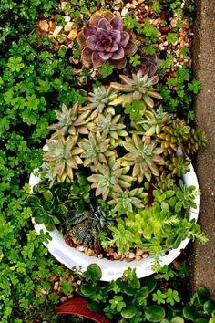 Gardening Magazines, Gardening Tips, Garden Guide, Garden Tools, Hand Embroidery Videos, Garden Quotes, The 5th Of November, Growing Vegetables, Houseplants