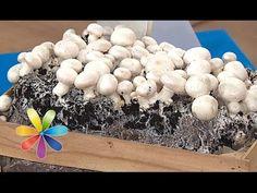 Как, где и на чем самостоятельно выращивать шампиньоны. Методики и технологии выращивания грибов шампиньонов в домашних условиях Small Farm, Green Life, Vegetable Garden, Stuffed Mushrooms, Projects To Try, Diy, Gardens, Plant, Growing Mushrooms