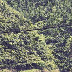 Bridges   #latergram #explore  #wanderlust #exploremore #tour #adventure #vacation #holiday #tourist #travel #tourism #forest #china #nature #natural #green #landscape #landscape_lovers #archilovers #bridge #walk #color #journey #minimalmood #minimal by josephrobertgoodwin