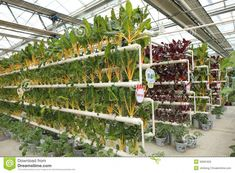 Photo about Soilless cultivation vegetables in a greenhouse, north china. Image of agriculture, horticulture, indoor - 30681650 What Is Greenhouse, Aquaponics Greenhouse, Hydroponics System, Hydroponic Gardening, Greenhouse Film, Aquaponics Plants, Greenhouse Plans, Permaculture, Agriculture