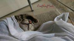 #Cat #happy