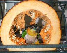 """Résultat de recherche d'images pour """"jouet citrouille perroquet"""" Pumpkin Carving, Images, Diy, Toy, Search, Animaux, Home, Bricolage, Pumpkin Carvings"""