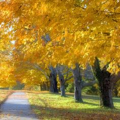 """""""Autumn is a second spring when every leaf's a flower."""" -Albert Camus"""