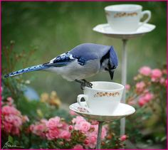 Use tea cups and saucers drilled on a stick as birdfeeders