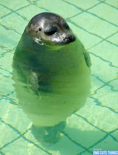 When you're to short to stand up in the pool
