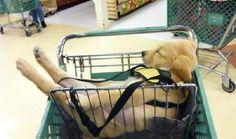 30 самых забавных фото спящих собак