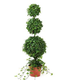 Enjoy fresh garden charm all year with this hardy artisan topiary. Elegant and timeless, it boasts a USA-grown premium-quality plant that effortlessly livens up décor.