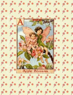 Cicely Mary Barker's Flower Fairies - Amazing artwork