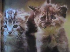 Kittens, inspired by Kittens! - YouTube