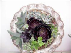 succulent-framed-art_1463