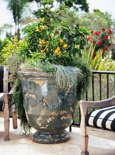 Citrus in a pot.  Miniature oranges with sage and rosemary.  Enjoy a Vegetable Container Garden   Midwest Living