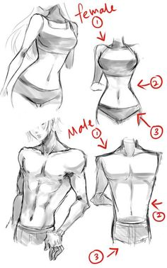 #female #male #body Typical female and male body tips by Neire-X.deviantart.com on @deviantART