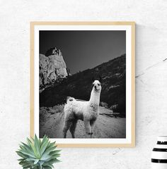 Lama Print Animal photography Nursery Animal by LionartPrints