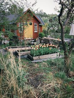 My neighbors have beautiful and creative ideas for their garden. Like the tulip field piece in the garden 🌷, you love this too? Terrace Garden, Garden Plants, Indoor Plants, Scandinavian Cottage, Modern Cottage, Tulip Fields, Garden Cottage, Edible Plants, House In The Woods