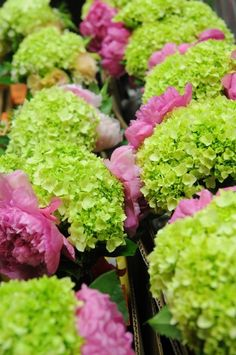 675 best pink green images on pinterest ideas planting flowers different color hydrangeas mightylinksfo