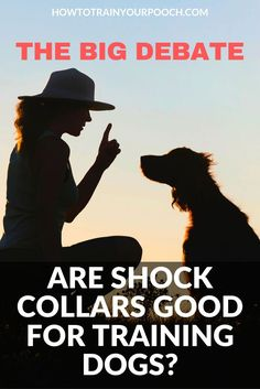 Are Shock Collars Good for Training Dogs? The Big Debate - How to Train Your Pooch Dog Training Equipment, Best Dog Training, Bark Collars For Dogs, Dog Collars, Dog Shock Collar, Stop Dog Barking, Most Beautiful Dogs, Buy A Dog, Aggressive Dog