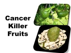 The Graviola Tree Is A Natural Cancer Cure