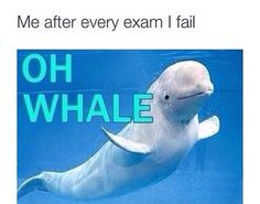 This is not something that should make me laugh. oh whale. College Humor, School Humor, College Life, Oh Whale, Whales, Pokerface, Xbox 1, Tumblr Funny, Puns