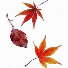 Carolyn Jenkins: Watercolor Autumn Leaves
