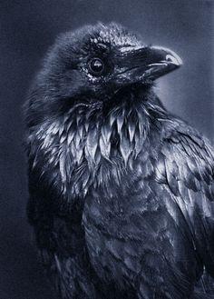 Google Image Result for http://www.deviantart.com/download/79525220/raven_by_Alaersu_Aetris.jpg