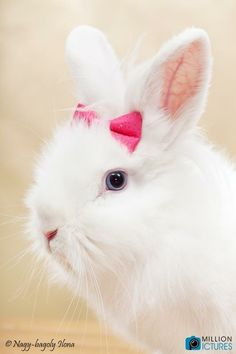 White bunny rabbit Cute Bunny, Bunny Rabbit, Adorable Bunnies, Animals, Bunny, Animales, Animaux, Animal, Animais