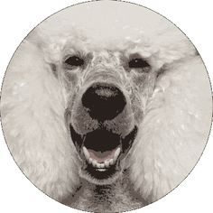 Stream and Dream - mo° sound Kugellautsprecher Pro-ject Audio, Audio Speakers, Polar Bear, Technology, Gold, Animals, Wireless Speakers, Speaker Wire, Audio Studio
