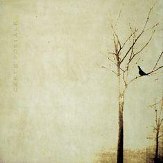 sur une branche..  un oiseau by laflaneuse // linda vachon (les brumes)  https://www.flickr.com/photos/lesbrumes/