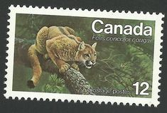 Small Wild Cats, Stamp Auctions, Postage Stamp Art, Love Stamps, Picture Postcards, Canadian Artists, Mail Art, Stamp Collecting, Graphic Design Inspiration