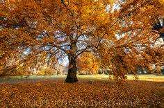 tree in the park, philipp von ostau, schloss dretzel 2015
