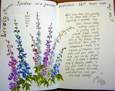 Sketching in Nature: Mystery Flowers