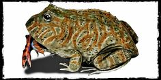 C'era una volta una rana che mangiava i dinosauri - Il Post