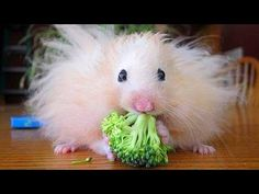Super fun and humorous ANIMAL videos #7  Funny animal compilation  Watch & laugh!