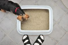 Dogs love snacking on the treats they find in a cat's litterbox. Veterinarian Dr. Marty Becker explains why and how you can stop this icky behavior.