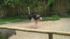 Sea Aquarium, Singapore, Bird, Animals, Animales, Animaux, Birds, Animal, Animais